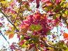 Tmavočervené květy v detailu (2.5.)