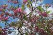 Park Srdce na Proseku se stromy plné květů