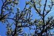 Rozkvetlý stromek pod oblohou
