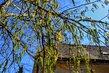 Jarní větve