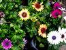 zahrada 2019-různé barvy