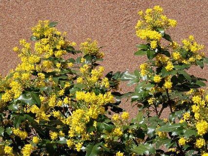 FOTKA - Jaro v žlutém