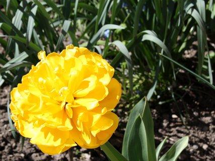 FOTKA - Krásavec v žlutém