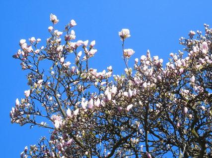 FOTKA - Květy a poupata (15.4.)