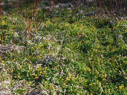FOTKA - Žluto-zelený koberec (16.4)