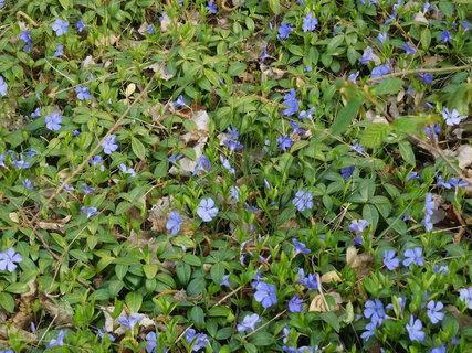 FOTKA - Zeleno-modrý koberec (23.4.)