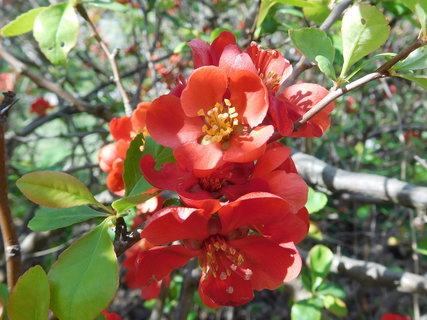 FOTKA - Krásná barva květů v detailu (25.4.)