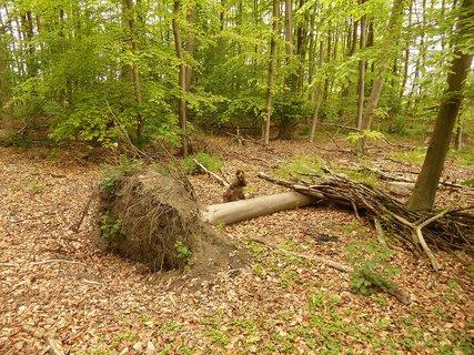FOTKA - stromecek hapal