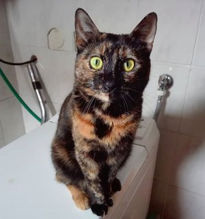 FOTKA - kočičí hypnotizérka