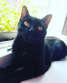FOTKA - Černý satánek