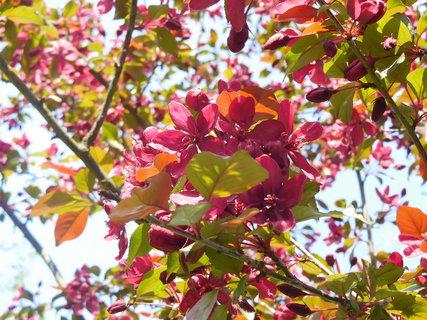 FOTKA - Tmavočervené květy v detailu (2.5.)