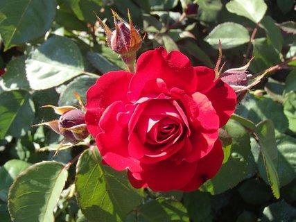 FOTKA - kráska v červenom