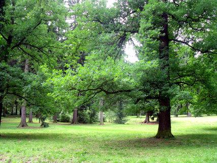 FOTKA - část zámeckého parku v Chyši