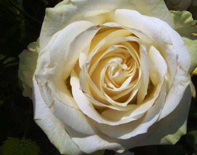FOTKA - Růže z kytky