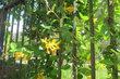 Dnes z Letné - zelený plot