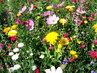 Dendrologická zahrada v Průhonicích - barevné květy