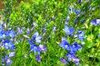 květnové kvetení