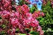 Obalené větve květy