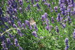 Dnes v parku mezi fialovými květy