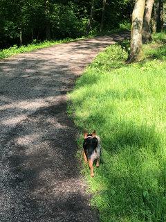 FOTKA - po ránu jdeme na procházku