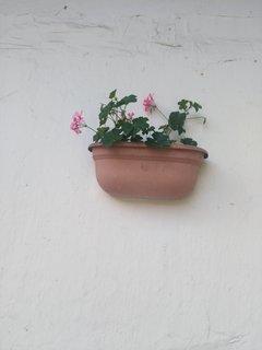 FOTKA - Muškát - pnoucí