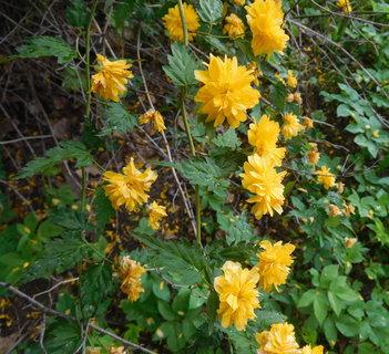 FOTKA - Větvička zákuly s květy (21.5.)