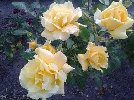 FOTKA - krásně kvetou