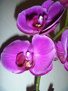 FOTKA - část orchidee