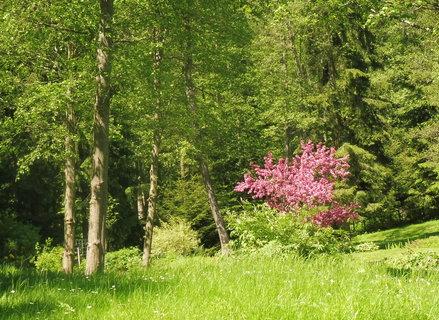 FOTKA - zahrada v ML