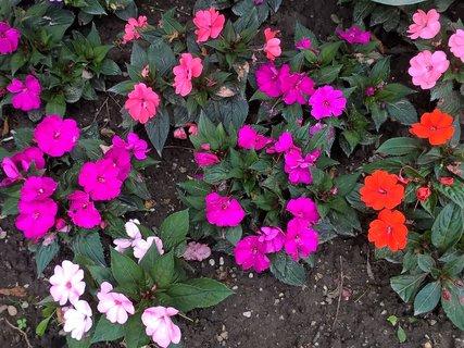 FOTKA - Kvety v parku