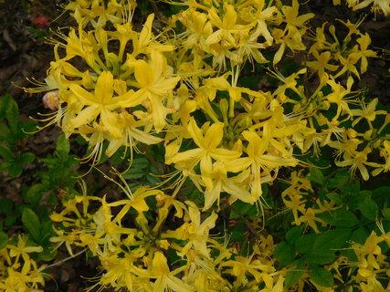 FOTKA - Žluté květy jsou menší (27.5.)