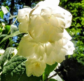 FOTKA - velké květy...