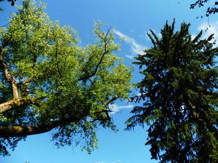 FOTKA - krásné stromy až do nebe ..