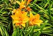 Krásné květy- areál ČZU