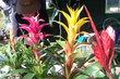 Hezké kytky