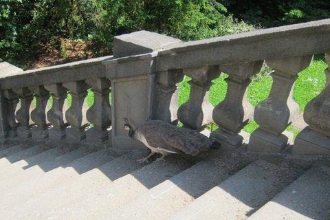 FOTKA - Vojanovy sady - tento chodí rád po schodech