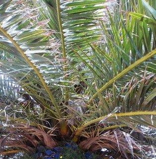 FOTKA - palma v Pule