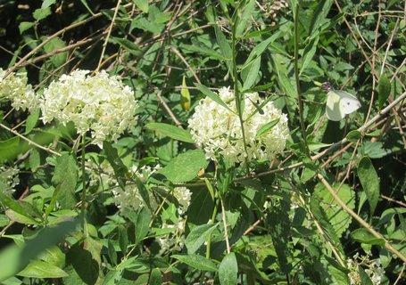 FOTKA - Kaizovy sady - rozkvetlé roští s motýlkem
