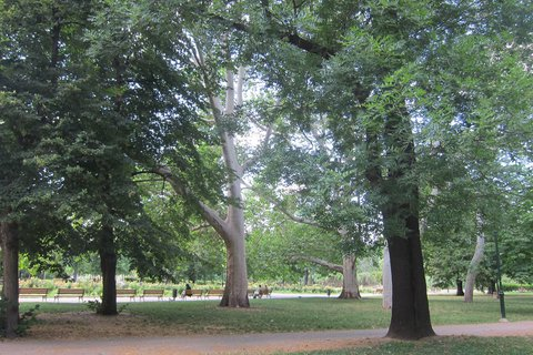 FOTKA - Kaizlovy sady -  a vzrostlé stromy