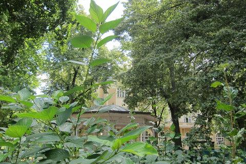 FOTKA - Kaizlovy sady - za plotem je Rozhlas Regina a Letní kino