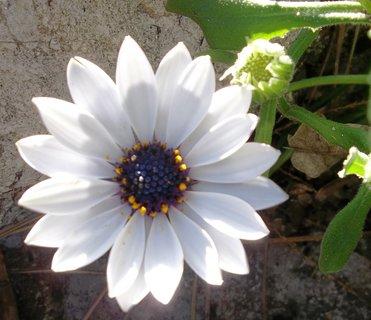 FOTKA - bílý květ,