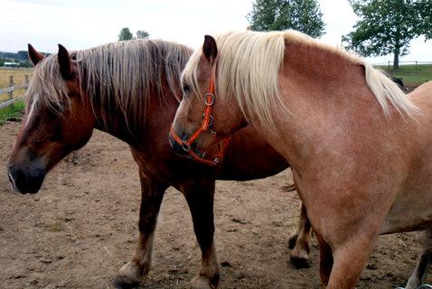 FOTKA - já mám koně, ...