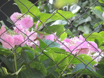 FOTKA - Kuk přes plot k sousedům