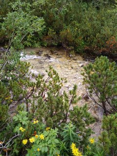 FOTKA - priezračná voda potôčika
