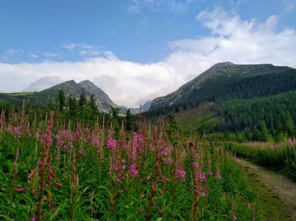 FOTKA - flóra Tatier