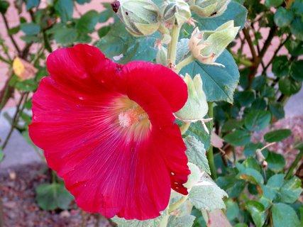 FOTKA - Červený kvet