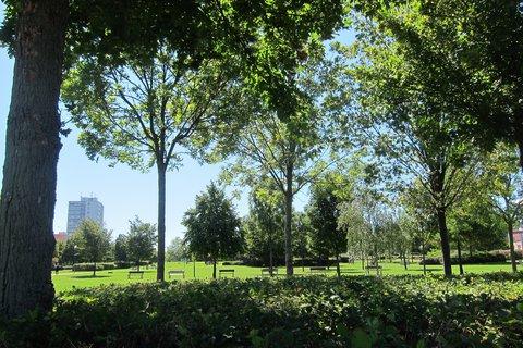 FOTKA - Cestou přes park na sídlišti...