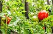radost na zahradě