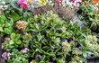 květiny - podzimní dekor