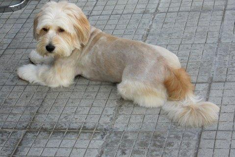 FOTKA - fotečka z procházky..psí holka